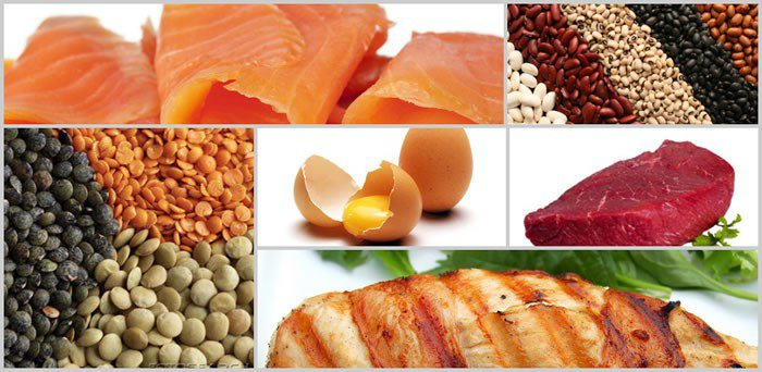 proteins for fat loss